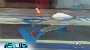 iBilib: Unbilibabol robot fish