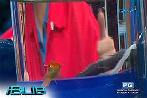 iBilib: Suspended fish tank